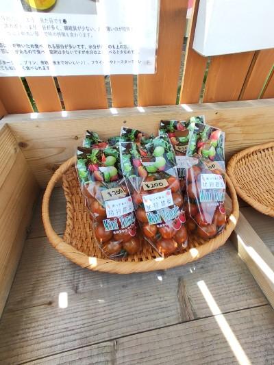 ミニトマト販売開始。